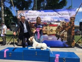 Rezultati izložbe pasa u Gospiću
